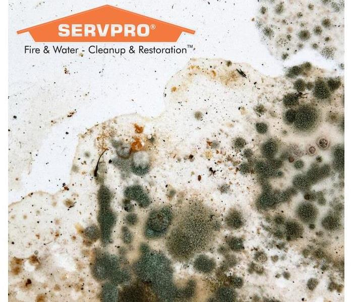 Mold Remediation How To Identify the Type of Mold in Your Home
