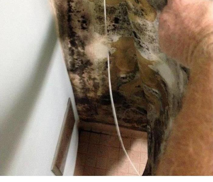 Mold Remediation How To Properly Rid Your Office Building Of Mold