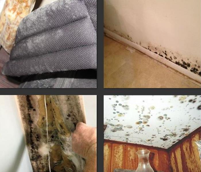 Mold Remediation Temple - Belton Residents:  Follow These Mold Safety Tips If You Suspect Mold